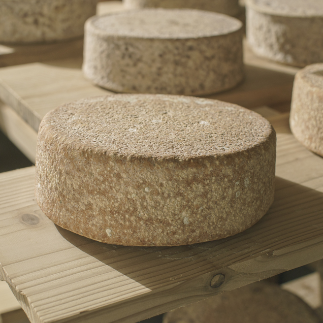 風土が育てるチーズ